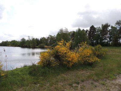 Dieser Bereich des Campingsees Marienfeld soll mit Erdbungalows bebaut werden