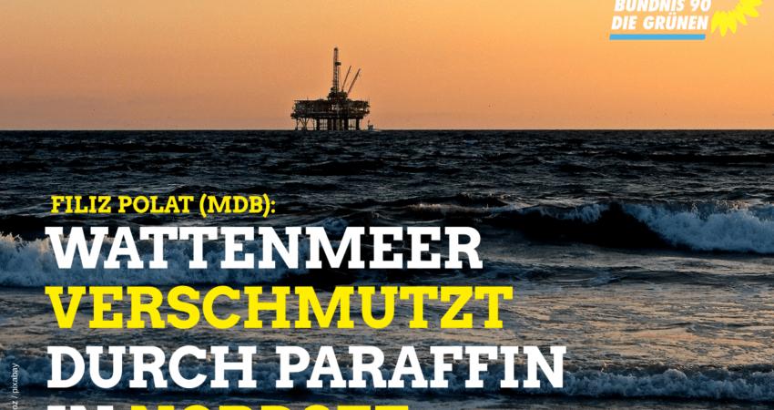 Filiz Polat: Wattenmeer durch Paraffin verschmutzt