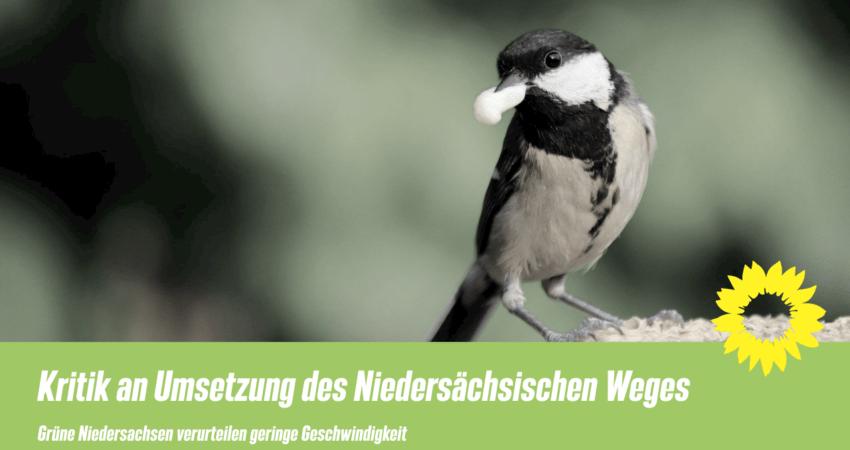 Kritik am Niedersächsischen Weg der Grünen NDS